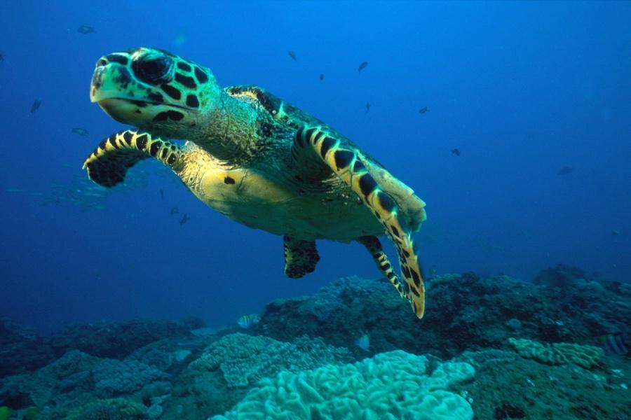 ocean safaris maputaland kwazulu natal south africa