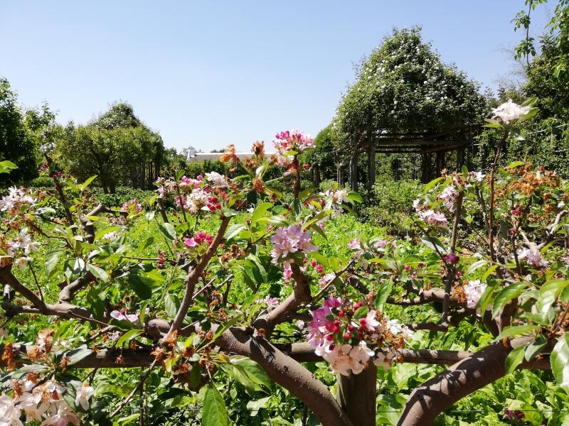 babylonstoren luxury wine farm hotel franschhoek area