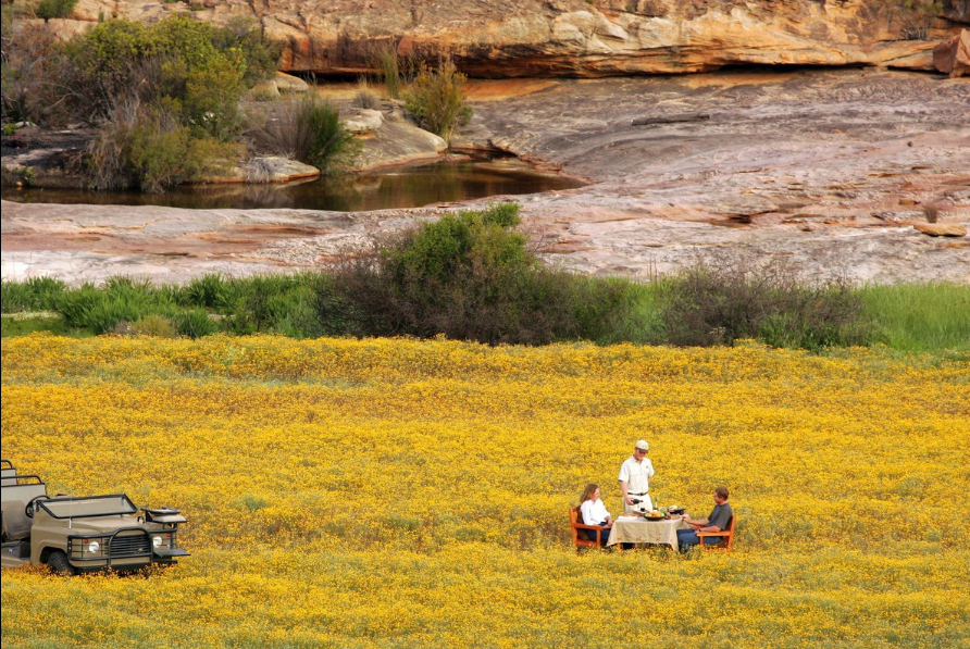 fynbos getaways western cape cape floral kingdom