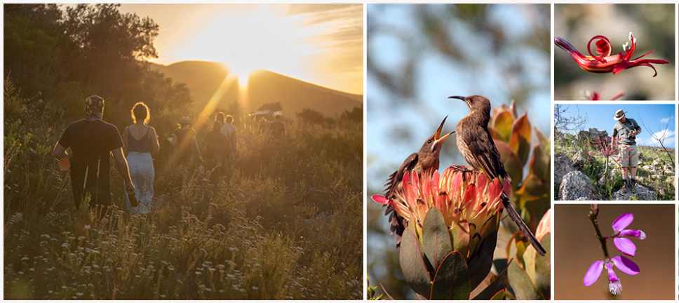 luxury fynbos reserve holidays in western cape and garden route
