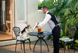 Pet friendly luxury hotels south africa