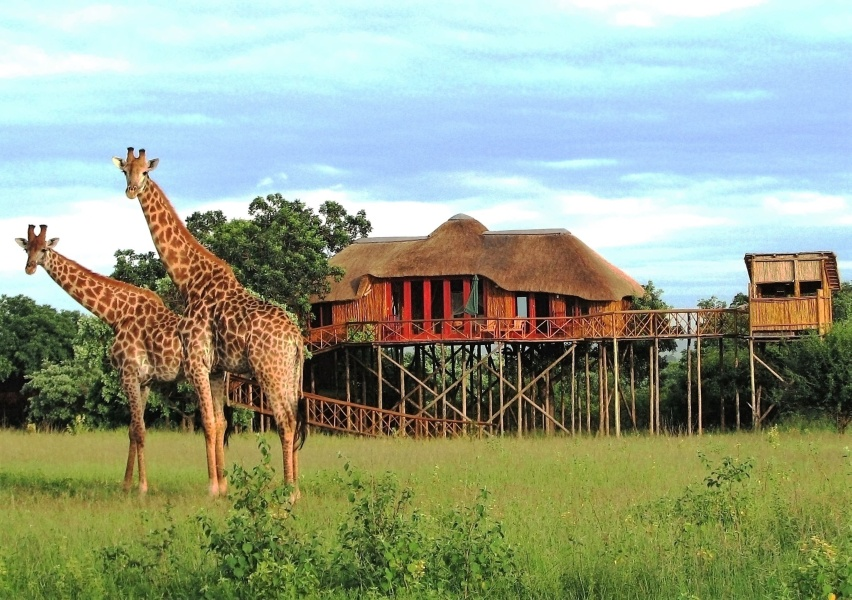 treehouse getaways south africa