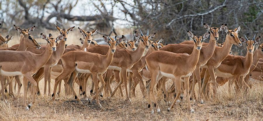 thornybush safari
