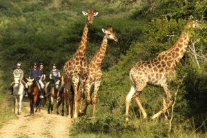 safari and horse riding getaway pongola area kwazulunatal
